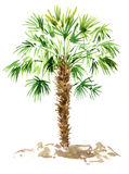 Watercolor palm tree Royalty Free Stock Image