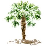 Watercolor palm tree Stock Photo