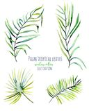 Watercolor palm tropical green branches illustrations Stock Photography