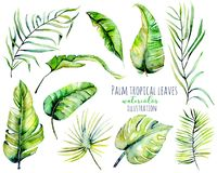 Watercolor palm tropical green leaves and branches illustrations Stock Photography