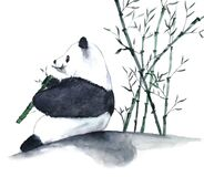 Watercolor panda eating bamboo hand drawn illustration isolated on white background.Traditional oriental. asia art style