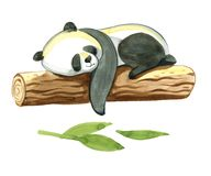 Watercolor panda lays on the tree. Watercolor illustration isolated on white background. Black and white panda lays on the log Stock Images