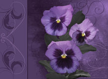 Watercolor with Pansies flowers Royalty Free Stock Photos