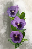 Watercolor with Pansies flowers Royalty Free Stock Images