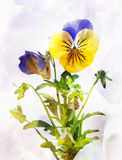 Watercolor pansy flower (Viola tricolor) Stock Photography