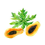 Watercolor papaya fruit. With leaf isolated on a white background. Half slice hand drawn illustration stock illustration