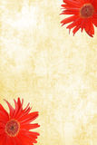Watercolor Paper with red Gerbera Daisies Stock Photography