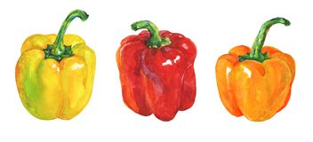Watercolor paprika peppers set. Watercolor yellow, red, orange paprika on white background. Hand drawn vegetable illustration. Painting set of bell peppers Royalty Free Stock Images