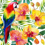 Watercolor parot seamless pattern Stock Photography