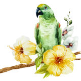 Watercolor parrot Royalty Free Stock Photos