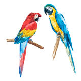 Watercolor parrot. Beautiful vector image with nice watercolor parrot Royalty Free Stock Image