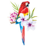 Watercolor parrot royalty free illustration