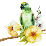 Watercolor parrot. Beautiful vector image with nice watercolor parrot Royalty Free Stock Photos