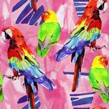 Watercolor parrot lovebird Royalty Free Stock Images