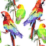 Watercolor parrot lovebird Royalty Free Stock Photos