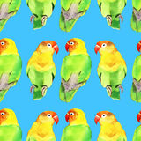 Watercolor parrot lovebird Royalty Free Stock Image