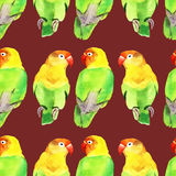 Watercolor parrot lovebird Stock Image