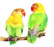 Watercolor parrot lovebird Stock Images