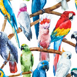 Watercolor parrot pattern Stock Images