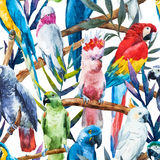 Watercolor parrot pattern Royalty Free Stock Images