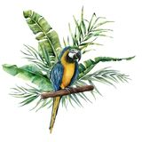 Watercolor parrot with tropical leaves. Hand painted parrot with monstera, banana and palm greenery branch isolated on vector illustration