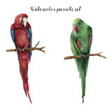 Watercolor parrots. Hand painted red-and-green macaw and red-winged parrot isolated on white background. Nature. Illustration with bird. For design, print or royalty free illustration