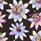 Watercolor passion flower pattern Royalty Free Stock Image