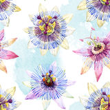 Watercolor passion flower pattern Royalty Free Stock Photos