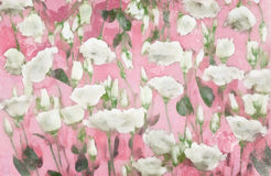 Watercolor pastel roses Royalty Free Stock Images