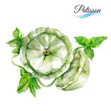 Watercolor patisson Stock Images