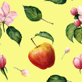 Watercolor pattern: Apple, apple blossom ang leaves Royalty Free Stock Photos