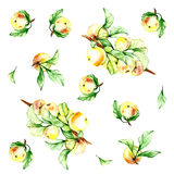 Watercolor  pattern  with apple Royalty Free Stock Image