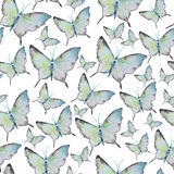 Watercolor pattern with batterfly Royalty Free Stock Image