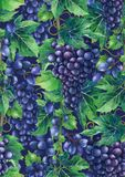 Watercolor pattern of blue grapes bunches royalty free stock images