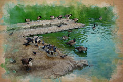 Watercolor pattern of ducks and doves Royalty Free Stock Images