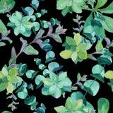 Watercolor pattern of eucalyptus, nettle, mint, succulents royalty free illustration