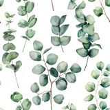 Watercolor pattern with eucalyptus round leaves. Hand painted baby and silver dollar eucalyptus branch isolated on white vector illustration