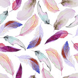 Watercolor pattern with feathers Royalty Free Stock Image