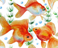 Watercolor  pattern with goldfishes Royalty Free Stock Photo