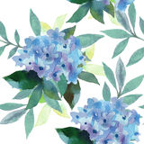 Watercolor  pattern of Hydrangea flowers Stock Image