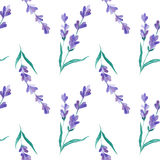 Watercolor pattern with Lavender. Hand painting. Seamless pattern for fabric, paper and other printing and web projects. royalty free stock image