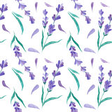 Watercolor pattern with Lavender. Hand painting. Seamless pattern for fabric, paper and other printing and web projects. royalty free stock photos