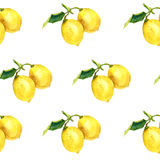 Watercolor pattern with lemons. Botanical illustration Royalty Free Stock Image