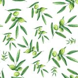 Watercolor pattern with olives, olive branches, a bottle of olive oil. Watercolor pattern with olives, olive branches, a bottle of olive oil on white buckground vector illustration