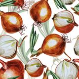 Watercolor pattern with onion Stock Images