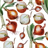 Watercolor pattern with onion Stock Photography