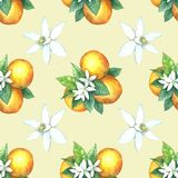 Watercolor pattern of oranges. Seamless pattern. Textile design. Handmade Royalty Free Stock Image