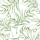 Watercolor pattern with palm tree leaves. Hand painted exotic greenery branch. Botanical illustration. For design, print. Or background stock illustration