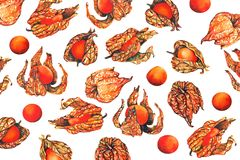 Watercolor pattern of physalis fruit berry vector illustration