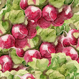 Watercolor pattern with radish. Hand drawn on white background. Stock Photo